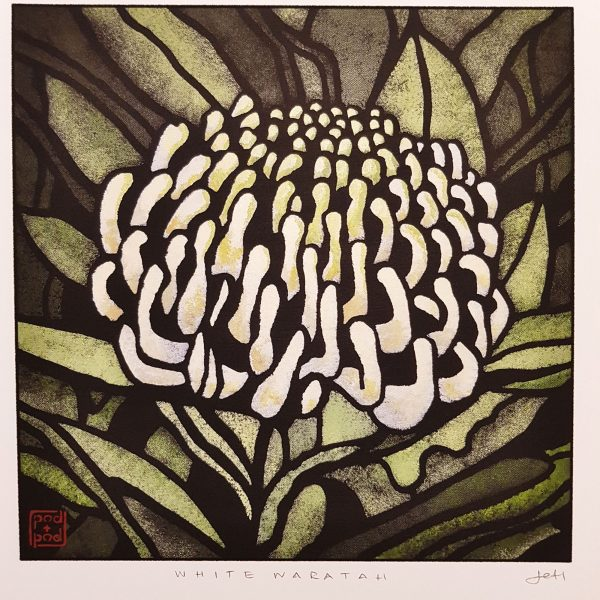 Framed Large White Waratah Print